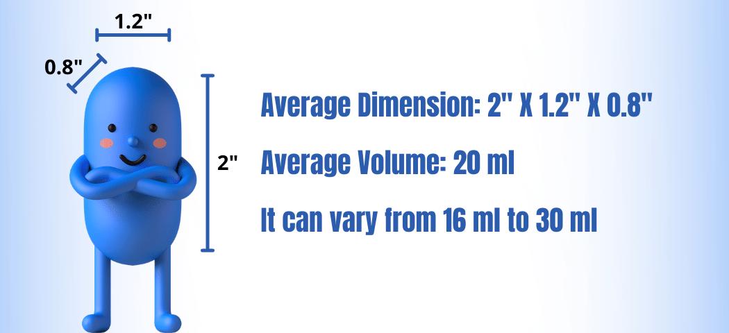 Average Size Of testicle